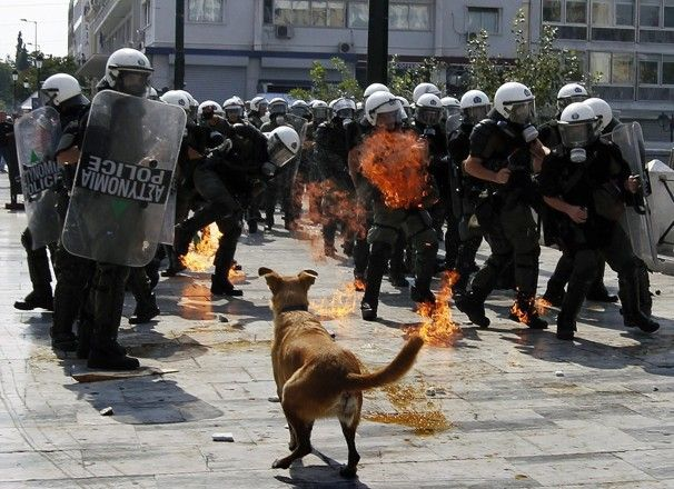 Loukanikos or Sausage, the riot dog, continues protesting in Greece - WorldViews - The Washington Post