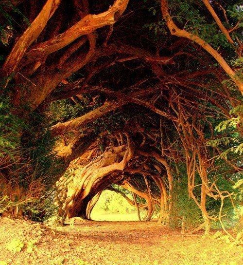 Historia drzew (2)