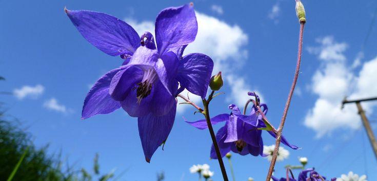 Plantas perennes resistentes al frío - http://www.decoora.com/plantas-perennes-resistentes-al-frio/