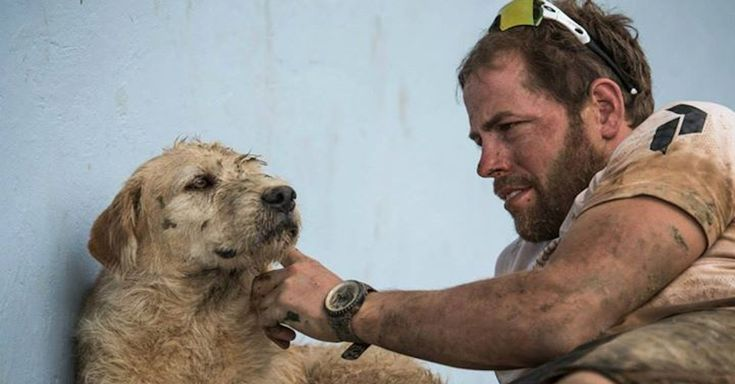 This Guy Offered A Stray Dog A Meatball And Got The Surprise Of His Life! via LittleThings.com
