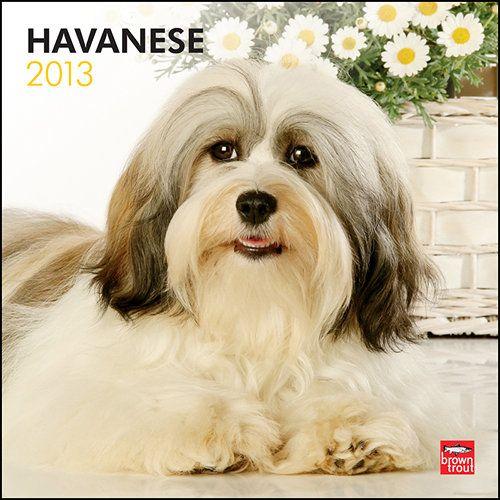 Cuban National Dog Breed