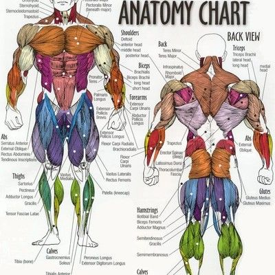 25+ best ideas about muscles of the body on pinterest | muscle, Muscles