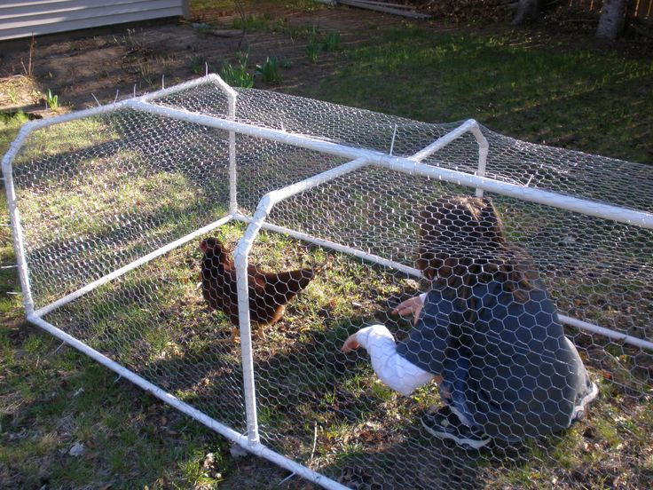 LOVE this chicken run made from pvc pipes - so easy:)