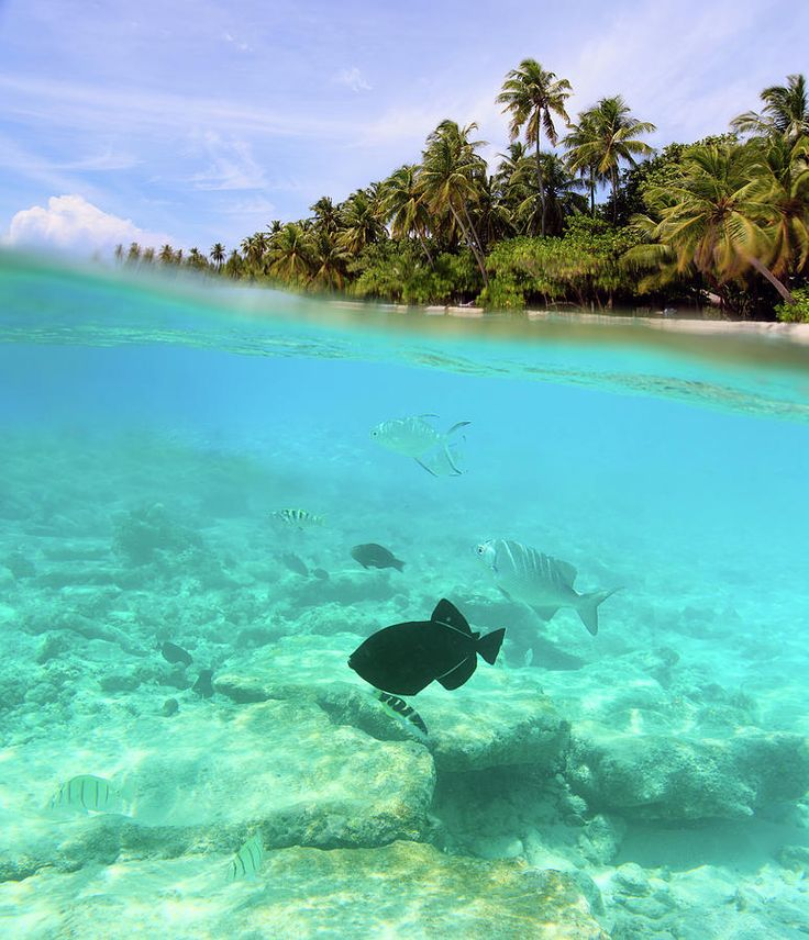 Island Photograph - Beautiful Tropical Island In Maldives Under And Above Water by NadyaEugene Photography
