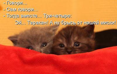 УЗНАЛ САМ  -  РАССКАЖИ ДРУГОМУ!: Лучшие котоматрицы этой недели!