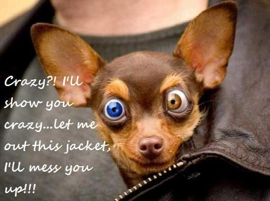 Funny Dogs With Words Crazy Dog Cute Funny Dogs Funny Dog