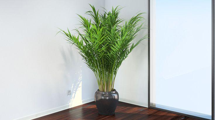 Deze 11 planten verbeteren de slaap en zuiveren de lucht in je slaapkamer - Page 4 of 13 - Lijstverse
