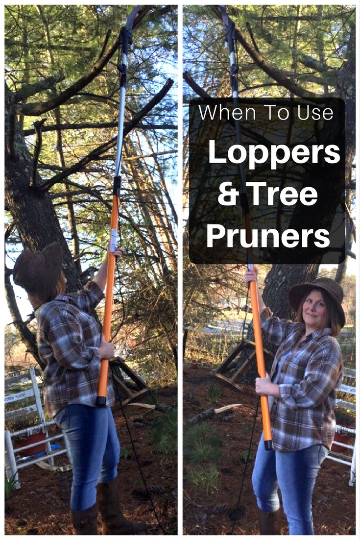 Wondering when to use specific gardening products? Gardening Know How breaks down when to use a lopper vs. tree pruner. With these tips, your trees, shrubs, plants and bushes will look great for summer.