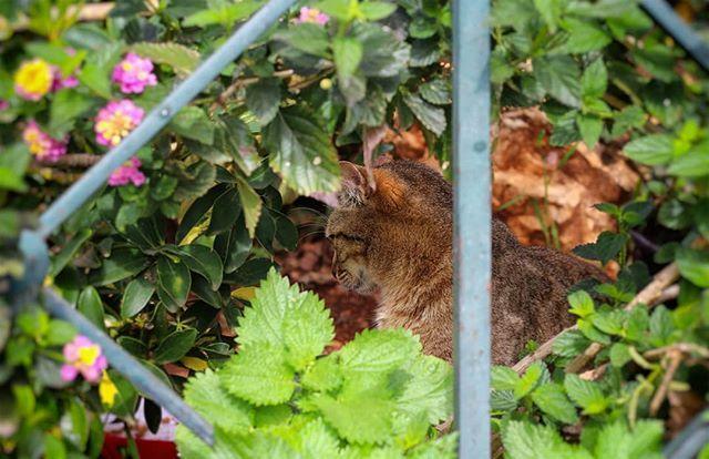 Δεν catαδέχθηκε να με κοιτάξει  #cat #catsofinstagram #catstagram #cats # #