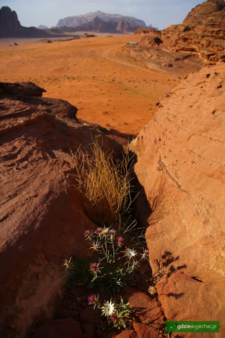 Pustynia Wadi Rum Jordania Wadi Rum Dessert more photos: http://gdziewyjechac.pl/19842/pustynia-wadi-rum-w-jordanii-na-duzych-zdjeciach.html