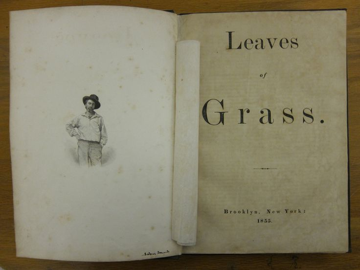 leaves of grass essay