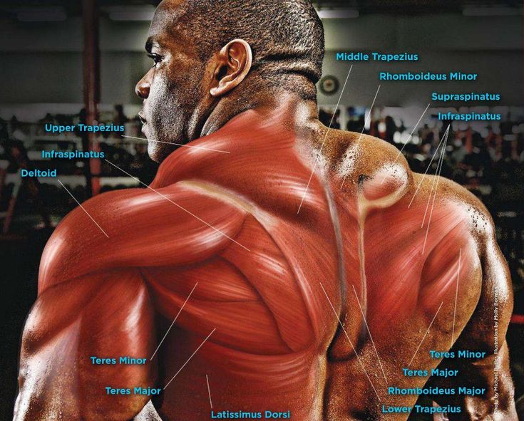 Best Chest Workout Routines for Men