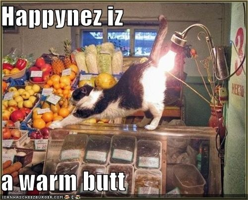 : Funny Things, Funny Cat Pictures, Silly Cats, Funny Cats, Funny Pictures, Pets, Lol Cats, Funniest Pictures, Photo