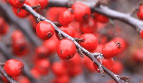 Toronto Botanical Garden Holiday Open House -- Thursday, December 5, 5:30 to 9:30 p.m. 'Tis the season to deck your halls and gardens with holiday decor! Get started on your holiday shopping list at ShopTBG while indulging in cider, shortbread or a light dinner. ShopTBG will be highlighting outdoor greens, winter container arrangements and holiday gifts.
