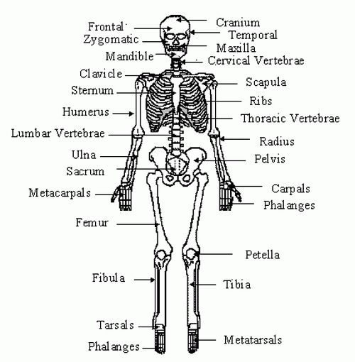 13 Best Urinary System Images On Pinterest