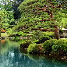 Fototapet - Calm Zen Lake and Bonsai Trees in Tokyo Garden