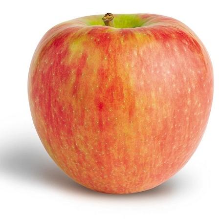 Honey crisp apple The Faves Pinterest
