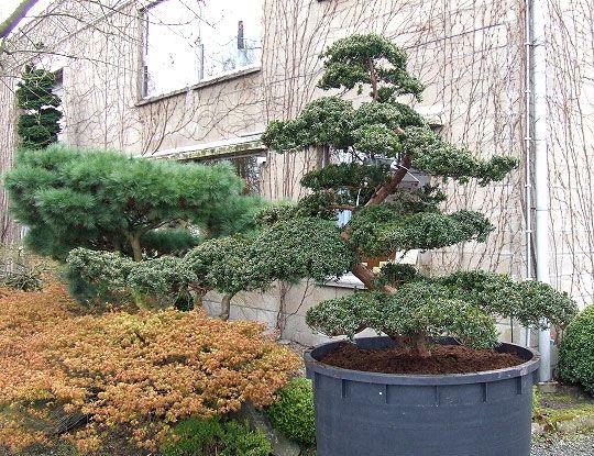 Perfect Backyard Japanese Garden   Google Search