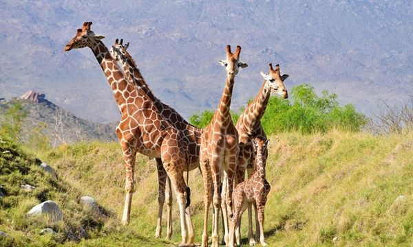 The Living Desert Zoo And Gardens Tickets