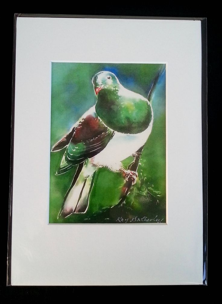 New Zealand KERERU, Wood Pigeon,Bird Art Print from my Silk Painting, Fine Art Print, Lounge Wall Art, A4 size, 21 x 14cm, A5 with Mat Board by KaySatherleyArt on Etsy