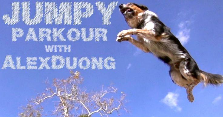 Jumpy es uno de los perros entrenados porOmar Von Muller si normalmente ves películas, o rondas mucho por youtube, es probable que hayas visto a algunos de sus perros pero nisiquiera lo sabías. Omar ha trabajado para hollywood en varias ocasiones, ya que sus perros hacen todo tipo de trucos y saltos mortales muy atractivos para la cámara. Fué en alguno de estos trabajos donde Omar conoció aAlex Duong, atleta profesional de parkour. Este video es el resultado de Alex y Jumpy jugando en un…