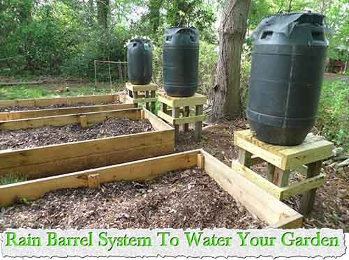 Rain Barrel System To Water Your Garden