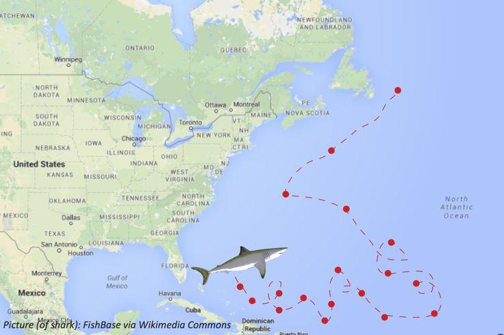 129 best shark week activities images on pinterest