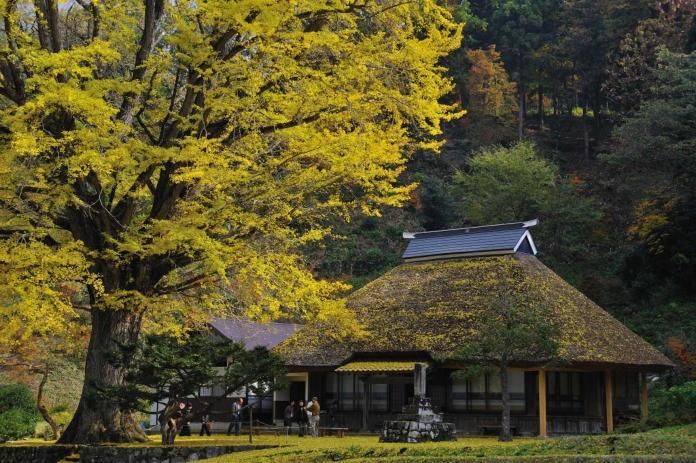 茅葺屋根のお寺と銀杏の葉 #Japan #Temple #Autumn