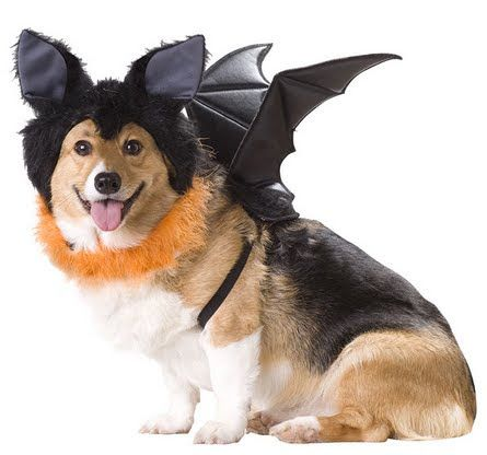 Bat Dog Costume, Large Pret 15 lei