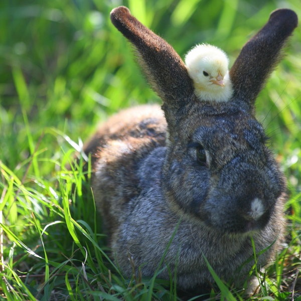 Rabbit, Animal Pictures, Friends, Animal Photography, Easter Bunnies, Couples Pics, Silly Animal, Funny Animal, Cutest Animal