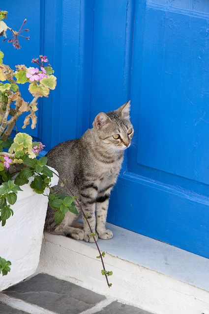 Kythira. Guarding the door :-)