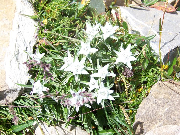 edelweiss - refuge Suisse