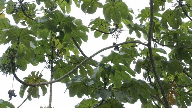 Uso de flora con fin medicinal pierde terreno en península de Yucatán