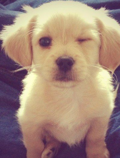 Puppy wink.