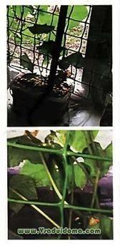 выращиванеи огурцов на подконнике