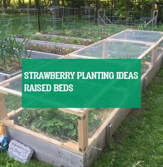 Erdbeerpflanzen Ideen Hochbeete Strawberry Planting Ideas Raised Beds Bed Bedsbed E In 2020 Strawberry Plants Strawberry Plants Ideas Raised Strawberry Beds