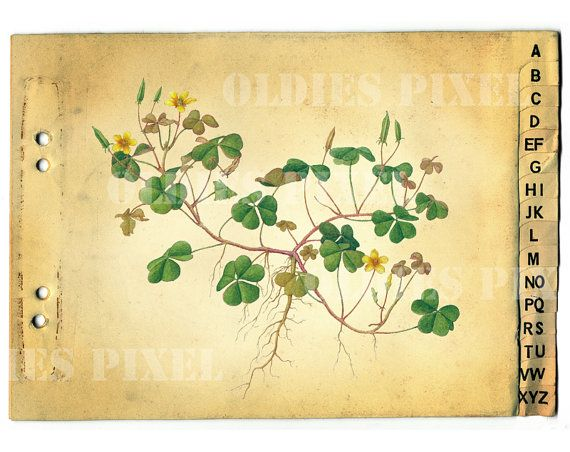Creeping Woodsorrel Plant Drawing Instant Download by OldiesPixel, $3.25