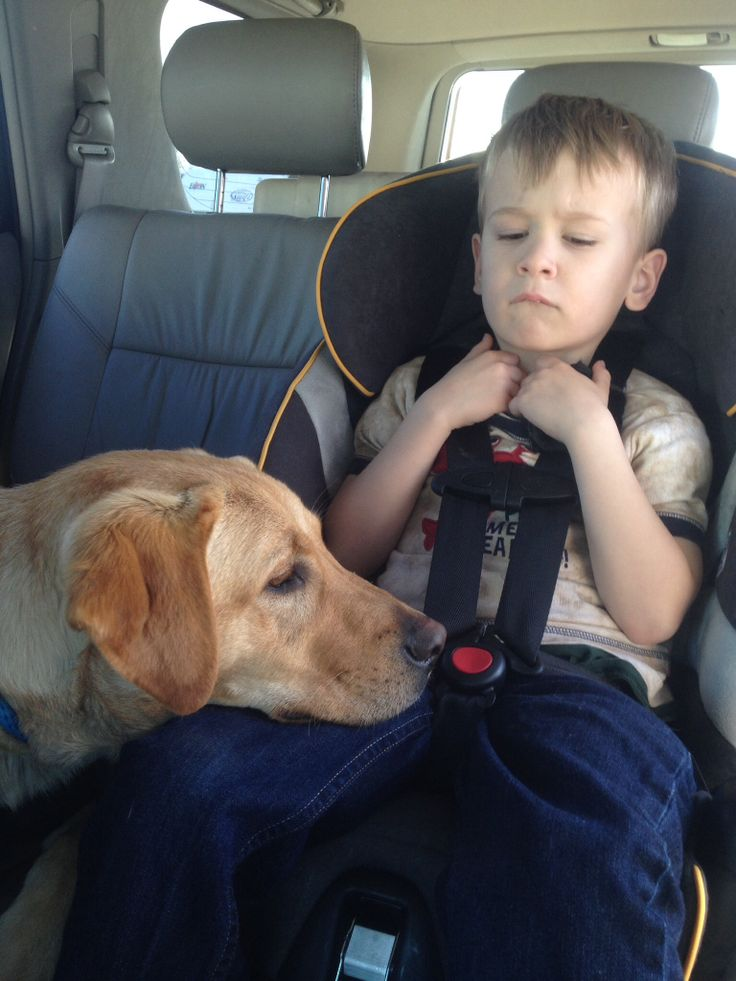 Service Dog Training For Sensory Processing Disorder