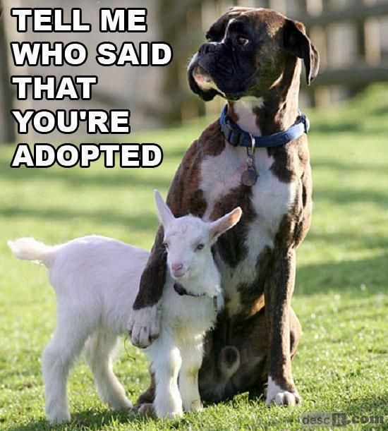 Tell Me Who Said That You're Adopted - this is how I feel when I hear someone has asked about your real family. I am your real family.