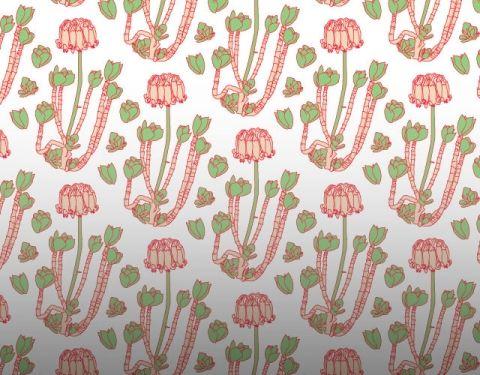 Cotyledon Fabric