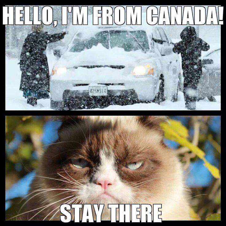 7d28dcb7c55ddf24aceb631615b30efe grump cat grumpy cat meme 161 best grumpy cat images on pinterest grumpy kitty, grumpy cat,Frowning Cat Meme