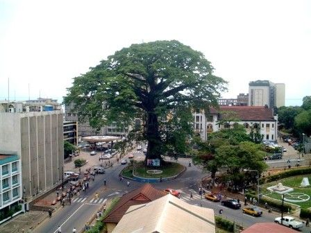 The famous tree roundabout in the capital