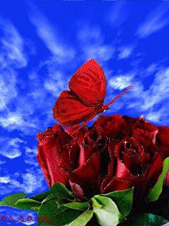 ❤️GIF's ~ Butterflies