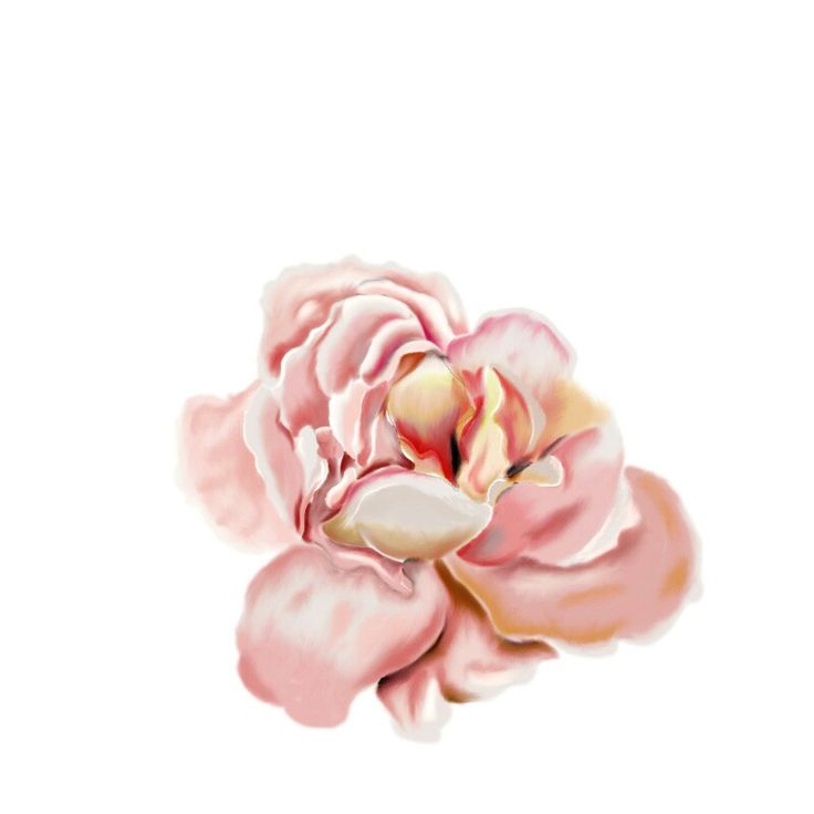 A rose by any other name on photoshop cs6