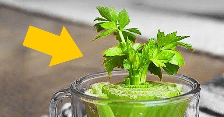 Το να εξασφαλίσετε να έχετε φρέσκα μυρωδικά στο σπίτι σας δεν είναι δύσκολο. Υπάρχουν πολλά φυτά που βγάζουν ρίζες μόλις μπουν στο νερό και...