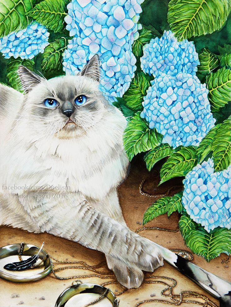 """Judgement of the Heart""    Watercolor pet portrait of a ragdoll cat named Sherloki with blue hydrangea in the background and a scale in the foreground."