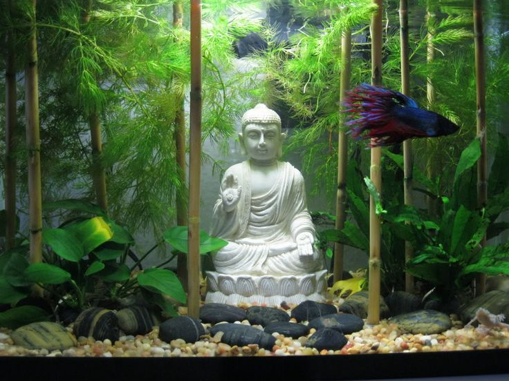 Decoration Zen Aquarium : Zen buddha rock garden aquascape