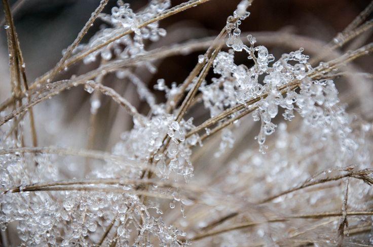 Szadź w Górach Sowich / Hoar-frost in the Sowie Mountains