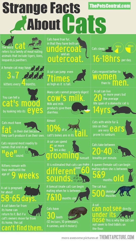 Strange facts about cats... I like random weird facts, okay? Our cat is named Heidi... she lives in a house of mostly women...milk makes her icky... interesting...