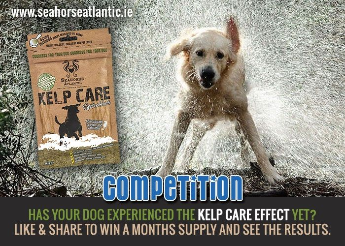 "To celebrate the 1st of October & no better time to let your ‪#‎dog‬ experience the ""Kelp Care effect"", we have a ‪#‎competition‬ simply ""re-pin"" the offer below. Winner announced end of the week so get pining"